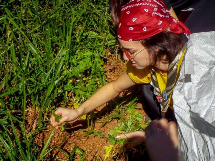 Escoteiros do Brasil integram Comissão Estadual e Conselho Municipal do Meio Ambiente em SP