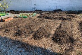 Pioneiro de São Vicente planta horta em lar de idosos